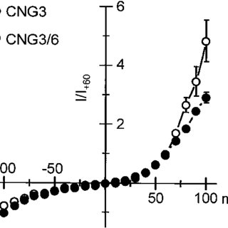 Expression of CNG6 transcripts in mouse tissues. A, Scheme