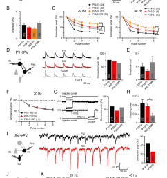 distinct modulation of stp of intracortical synapses onto inhibitory pv cells a left  [ 850 x 1315 Pixel ]