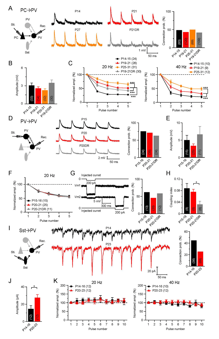 hight resolution of distinct modulation of stp of intracortical synapses onto inhibitory pv cells a left