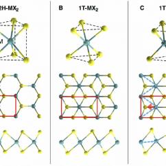 Phase Diagram Of Graphene 1998 Buick Lesabre Belt Atomistic Structure Monolayer Transition Metal Dichalcogenide Mx 2 .... | Download Scientific ...