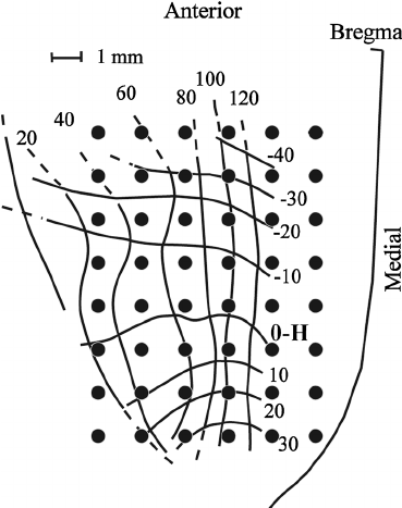 Schematic diagram of the cortical recording sites. An