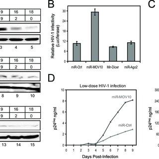 (PDF) Moloney Leukemia Virus 10 (MOV10) Protein Inhibits
