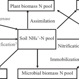 Nitrogen pools and key processes of nitrogen cycle in