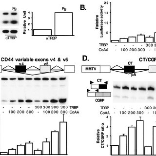 (PDF) CoAA, a Nuclear Receptor Coactivator Protein at the