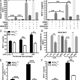 LPS-mediated UDP release through connexin 43. (A) RNA from