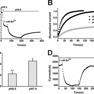 Characterization of the TREK-1 isoform. A, comparison of