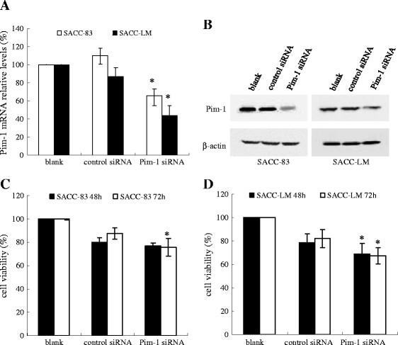 Effect of Pim-1 siRNA on Pim-1 expression level and cell