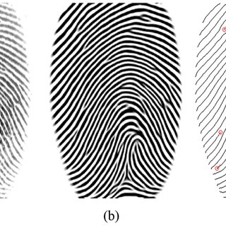 An example of fingerprint enhancement and minutiae