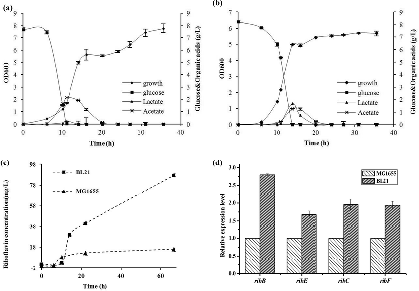 Growth, glucose consumption and acetate and lactate