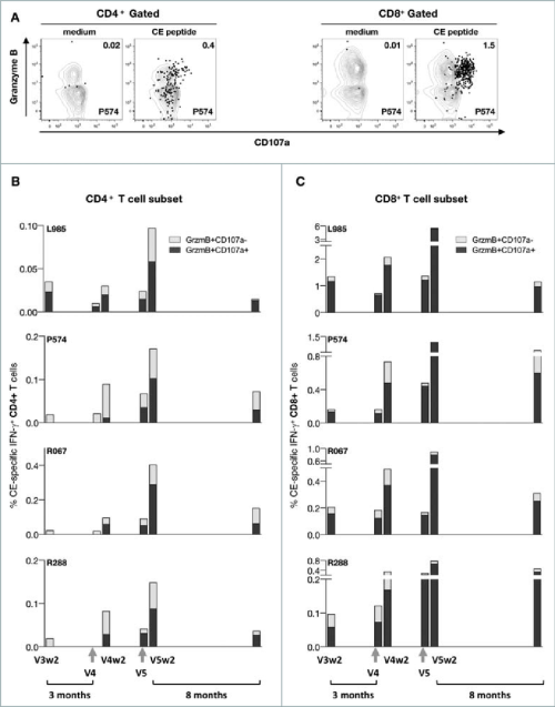 small resolution of ce prime env dna boost elicits potent and durable cytotoxic t cell responses