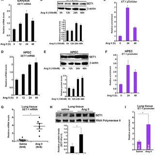 (PDF) Histone Methyltransferase SET1 Mediates Angiotensin