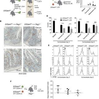 (PDF) Stress Kinase GCN2 Controls the Proliferative
