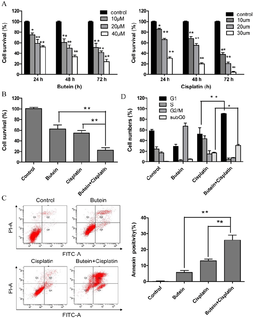 Effects of butein and/or cisplatin on cell proliferation