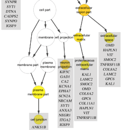 graphical representation of a nested cellular component classification download scientific diagram [ 714 x 1427 Pixel ]
