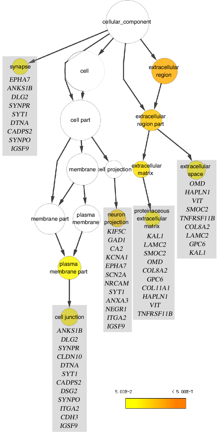 medium resolution of graphical representation of a nested cellular component classification download scientific diagram