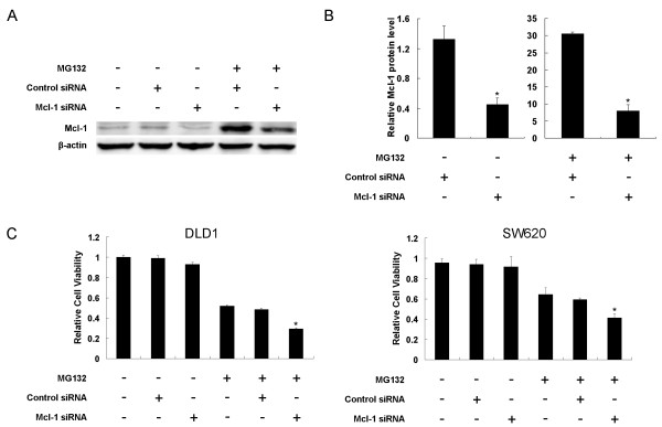Mcl-1 siRNA downregulated Mcl-1 protein expression and