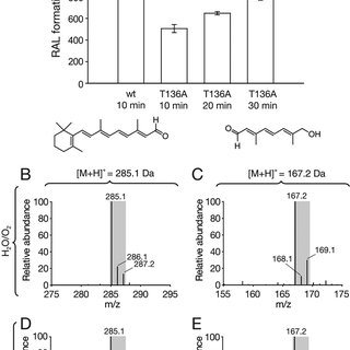 Phylogenic and enzymatic relationships among CCOs. A
