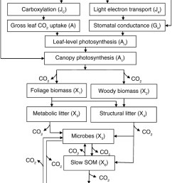schematic diagram of the terrestrial ecosystem teco model with canopy photosynthesis and vegetation soil c [ 850 x 1059 Pixel ]