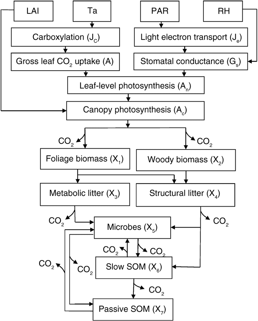 hight resolution of schematic diagram of the terrestrial ecosystem teco model with canopy photosynthesis and vegetation soil c