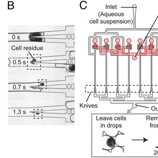 (PDF) Microfluidic guillotine for single-cell wound repair
