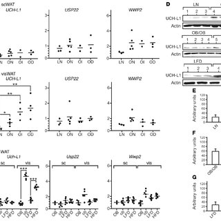 (PDF) Proteasomal degradation of retinoid X receptor