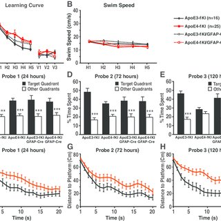 (PDF) Apolipoprotein E4 Produced in GABAergic Interneurons