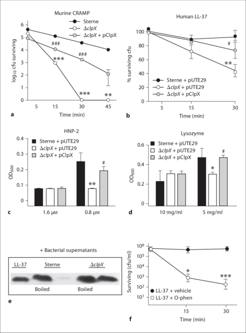 small resolution of clpx function protects b anthracis sterne against antimicrobial download scientific diagram