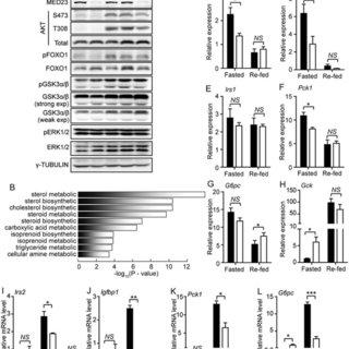 (PDF) Liver Med23 ablation improves glucose and lipid