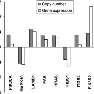 FAK expression by immunohistochemistry: a representative