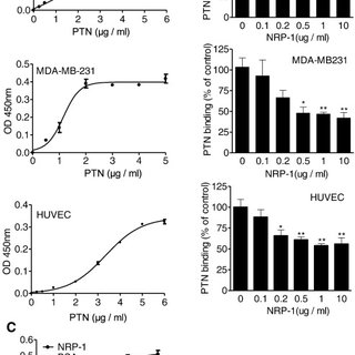 NRP-1 and PTN interaction activates MAPK, PI3K, and FAK