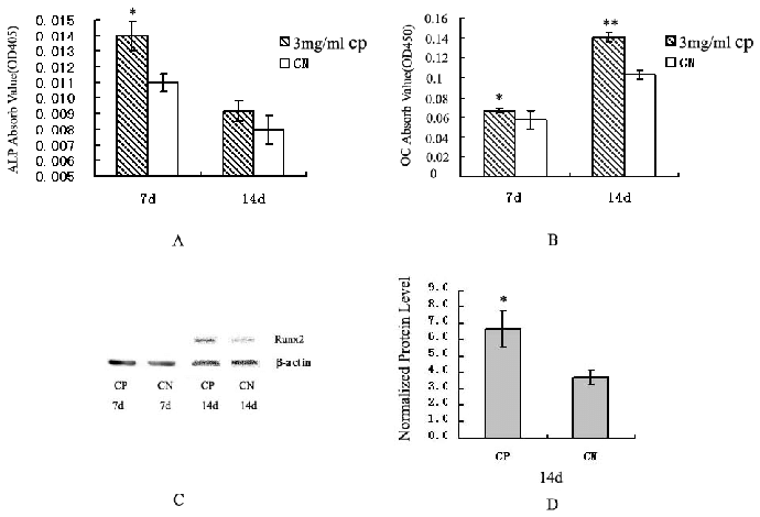 Osteogenic activities of bovine CP compounds in MC3T3-E1