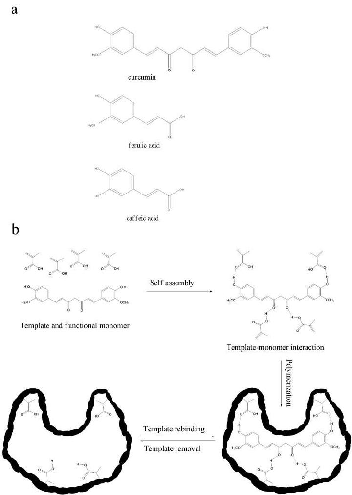 a. Molecular structure of curcumin, ferulic acid, and