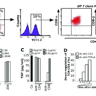 DP T cell clone selection and characterization. A