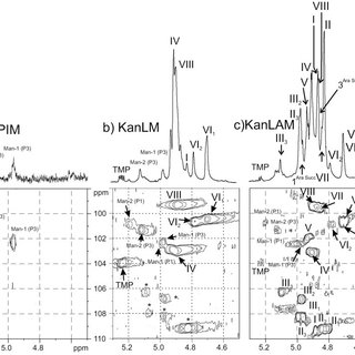 (PDF) Lipomannan and lipoarabinomannan from a clinical