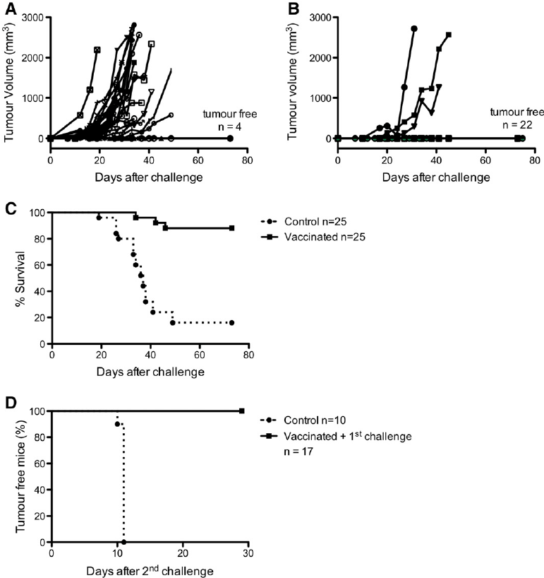 Tumor cells irradiated with 213 Bi give rise to antitumor