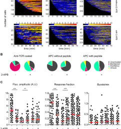 naive cd4 t cells display mainly intracellular calcium oscillations upon antigenic challenge a [ 850 x 1047 Pixel ]
