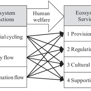 Relationships between ecosystem functioning and ecosystem