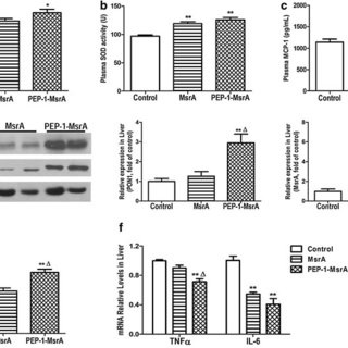 Purification and identification of PEP-1-MsrA and MsrA