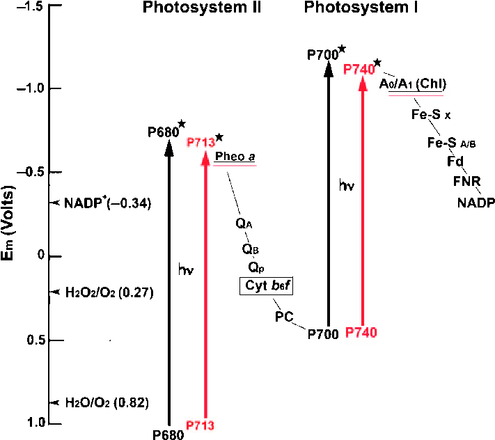 photosynthesis z scheme diagram 742 bobcat wiring of oxygenic and the comparison energy download scientific