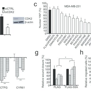 HMGA1 and CCNE2 affect YAP localization and activity. a