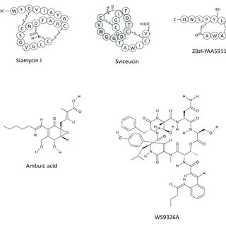 (PDF) Molecular Sciences Molecular Mechanism of Quorum