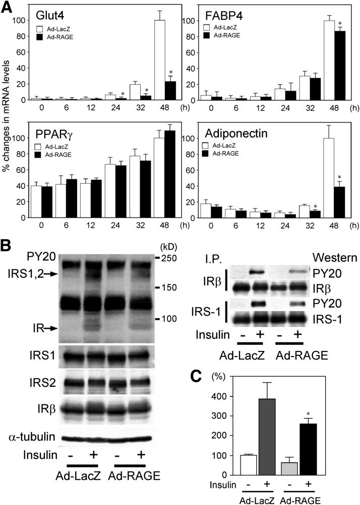 A: mRNA expression of Glut4, FABP4, PPARγ, and adiponectin