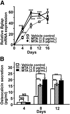 Time course of Bglap mRNA expression (A) and osteocalcin