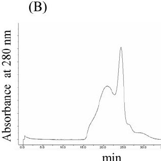 Analysis of secreted antibodies by gel permeation column
