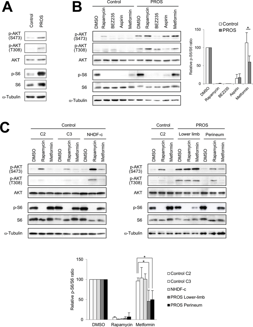Effect of inhibitors of PI3K/AKT/mTOR signaling in