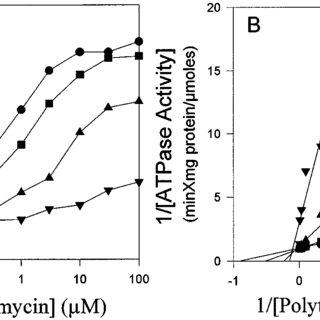 Activation of poly-L-tryptophan-inhibition of Pgp ATPase