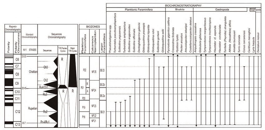 Chart showing stratigraphic ranges of molluscan and