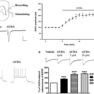 (PDF) Soluble epoxide hydrolase inhibitor enhances