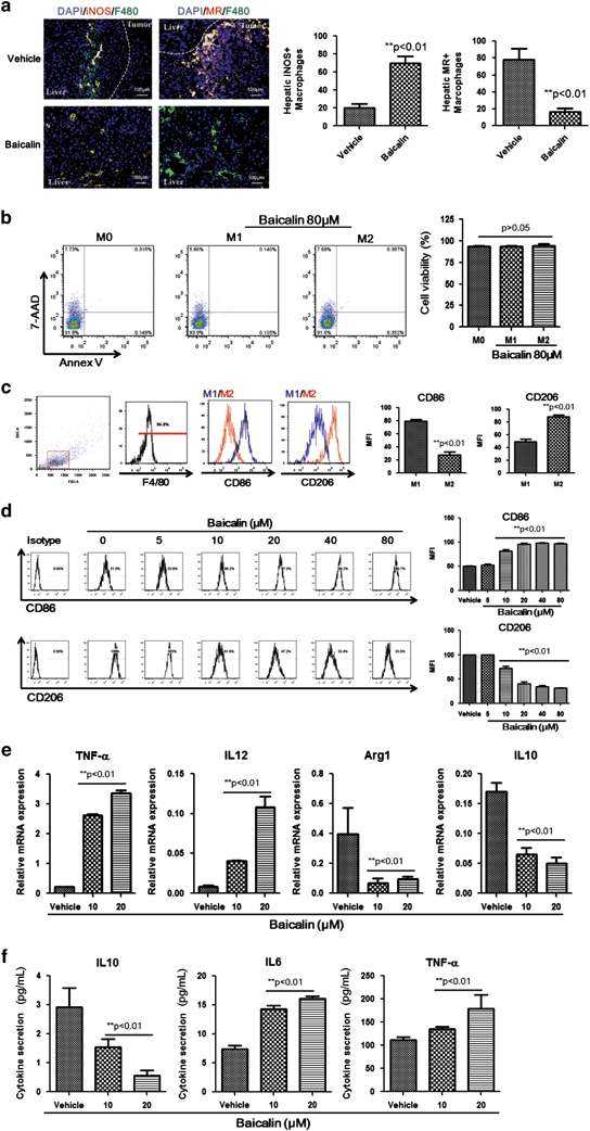 Treatment of baicalin results in reprogramming of M2-like