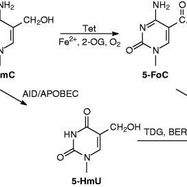 (PDF) Quantitative assessment of Tet-induced oxidation